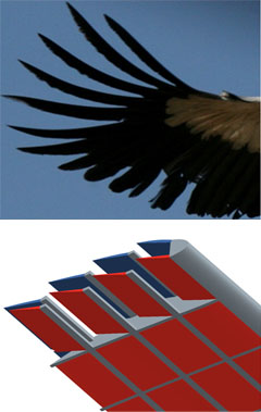 Feathered Wing Comparison